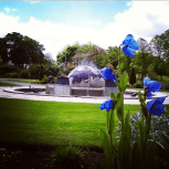 2015 Blue Poppies at David Livingstone Centre